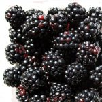 blackberries no protein powder