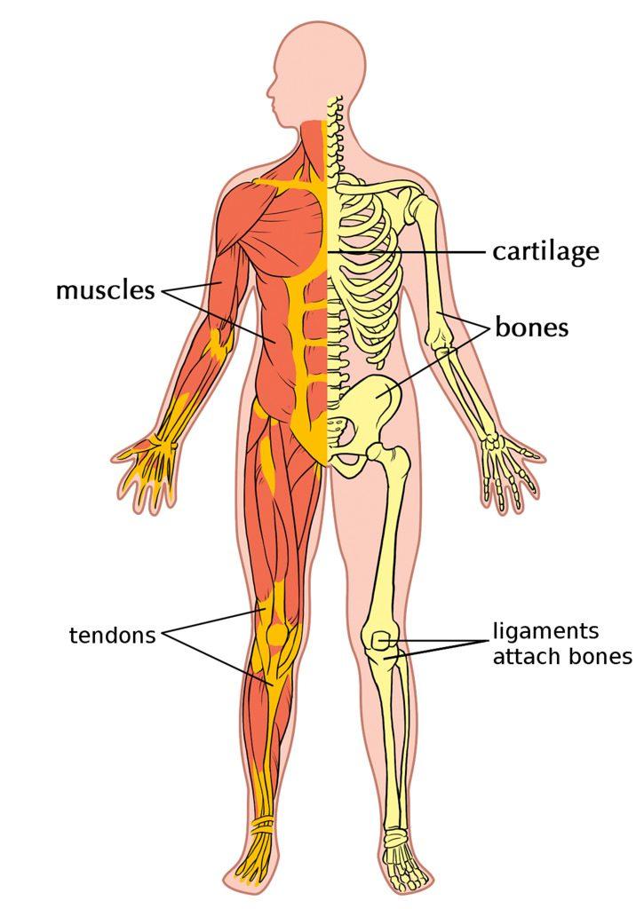 bone density trampoline health