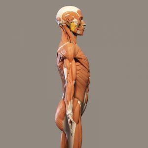back muscle tension