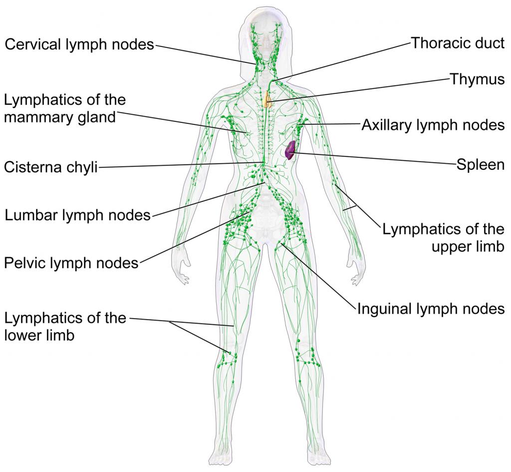 lymphatic flow trampoline